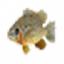 3D Sunfish Screensaver
