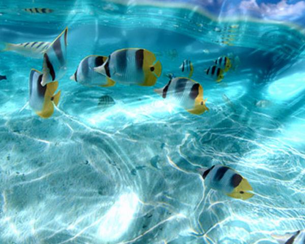 images watery desktop 3d