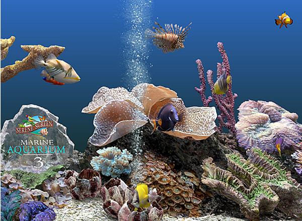 images marine aquarium. Black Bedroom Furniture Sets. Home Design Ideas