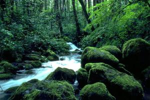 Forest Creeks Free Screensaver